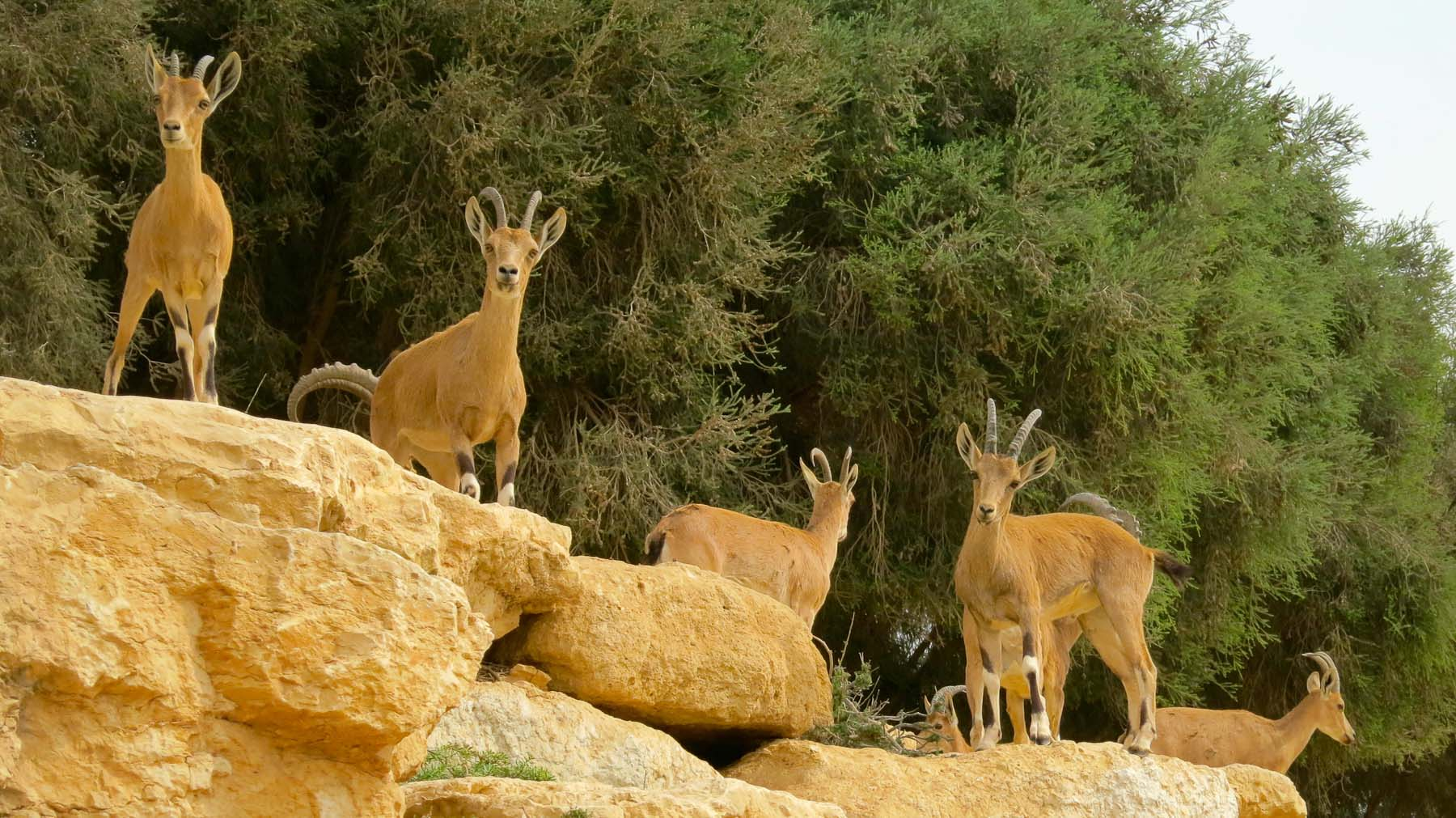 Day two brings out the wildlife at Ben Gurion's resting place.