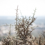 israel-hike7